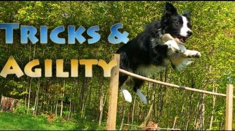 Tricks & Agility Fun with Nana