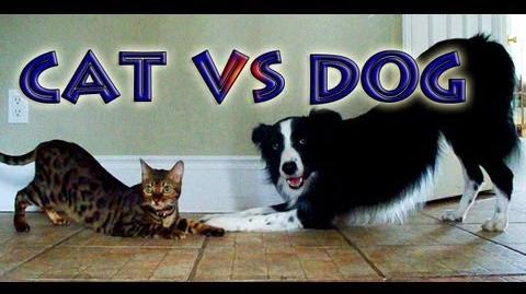 Cat vs Dog- A Trick Contest
