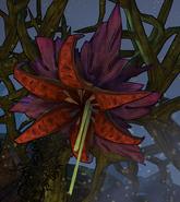 Ядовитый цветок
