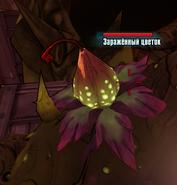 Безопасный зараженный цветок