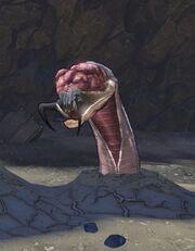 Песчаный червь 2