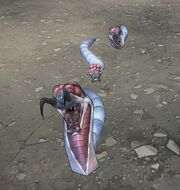 Личинка песчаного червя