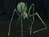 Волшебный паук