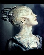 Borg-queenside