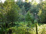 ForestGarden3