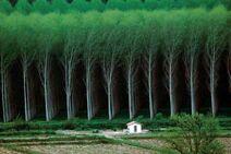 GridForest