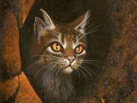 Wallpaper-tigerstar1600x1200