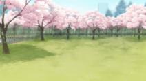 Park (sakura)