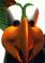 BPWii2 Squawks Icon