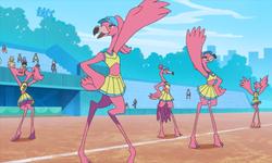 Flamingos-team