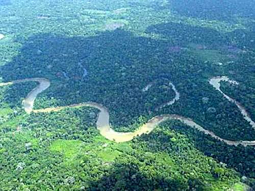 Foto - Amazonas