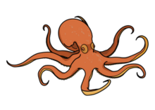 Octopot