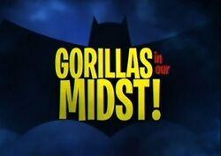 Gorillas in Our Midst!