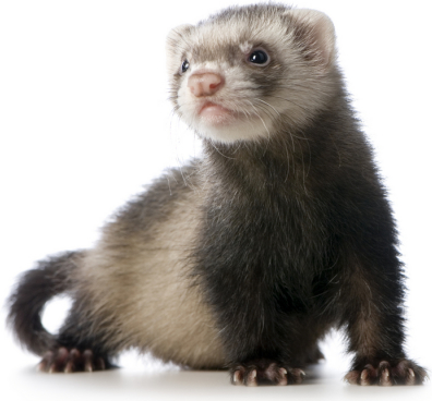 File:Small soft and furry spartan.png