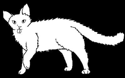 Long-haired female Medicne Cat blank