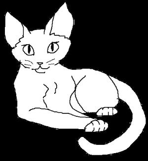 Short-haired female kittypet