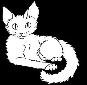 Long-haired male kittypet
