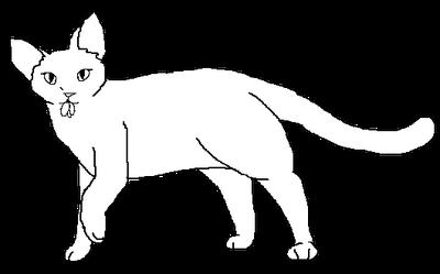 Short-haired female Medicne Cat blank