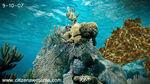 Sep reef