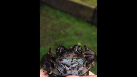 How To Catch A Frog