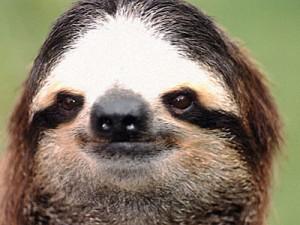 Sloth-300x225