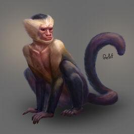 Gelof Monkey