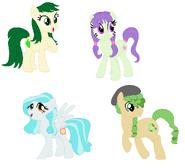Pony Paisley