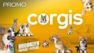 A Bunch of Adorable Corgis and the Greatest Heist Ever - Brooklyn Nine-Nine