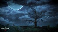 The Witcher 3 Wild Hunt Hanged Man's Tree