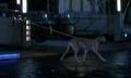 Dogwalker.PNG