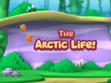 The Arctic Life