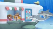 Dolphin H