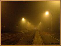 Fog in Bucharest-1046