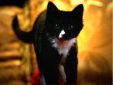 Miss Kitty Fantastico