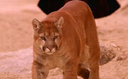 Guidemountainlion