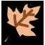 Crunchy leaf icon