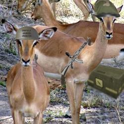 Impalaarmedforces