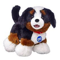 Promise Pets™ Bernese Mountain Dog