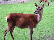 250px-Zoo-Dortmund-IMG 5549-a