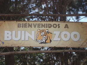 Buin zoo vicente 061