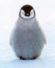 Pinguinito