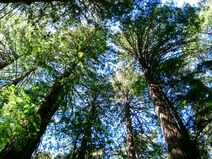 Muir Wood10