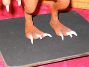 Crazy squirrel feet