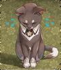 Catnotice
