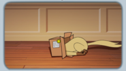 Chester playing with box 2