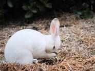 White-rabbit-oregon 56402 990x742