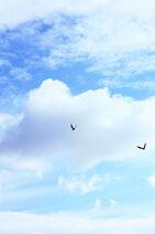 Free Blackbird Sky Creative Commons
