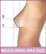 Bra-fitting method