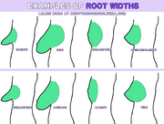 Root-width-examples