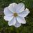 Litido's avatar